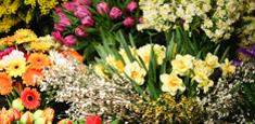 Kwiatyy