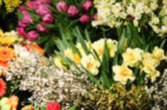 Main pic medium kwiatyy