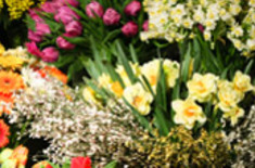 Main pic medium flowers