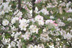 Main pic medium 010 wiosna