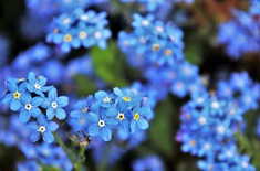 Main pic medium blue 3374250 1920