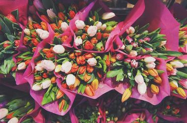 Main pic news tulipany