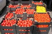 Photo pomidory skrzynki