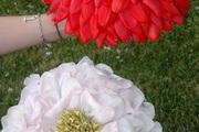 Photo kameliowa   z p atk w tulipan w